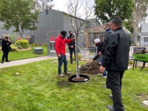 Tree Planting at Villa Del Sol