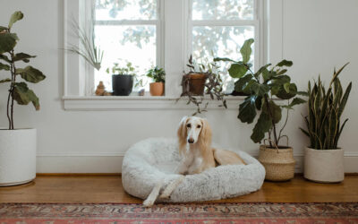 Three Tips for Living with Pets in an Apartment Community